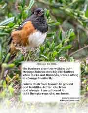 the towhees chant